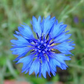 by Rajarshi Das - Flowers Single Flower (  )