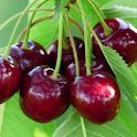 Fruits and Veggies icon