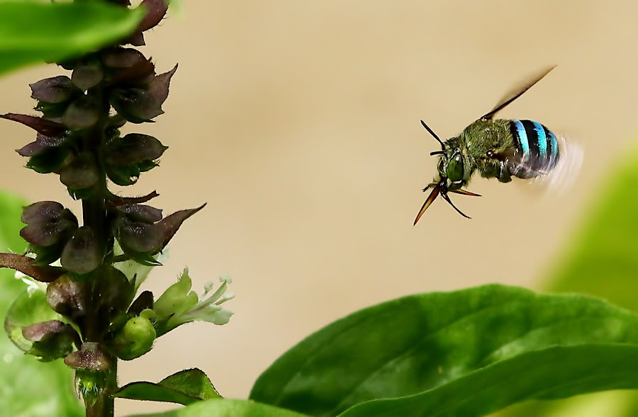 by Karthi Keyan - Animals Insects & Spiders