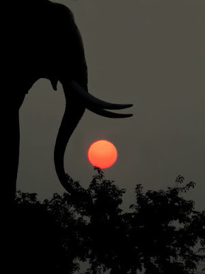 The Elephant Game di Silvio Lorrai