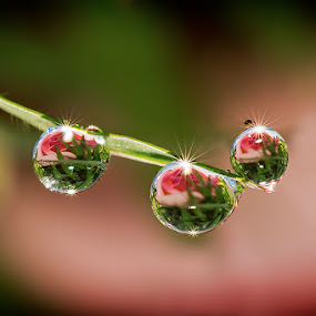 Never give up... by Citra Hernadi - Nature Up Close Water