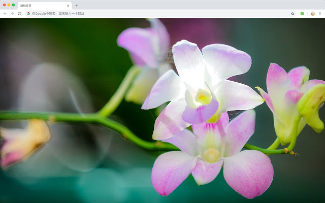 Beautiful natural New Tab, Wallpapers HD