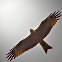 Sulle ali della libertà di Alessandro Remorini