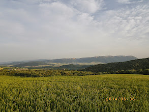 Photo: Champs de blés à perte de vue