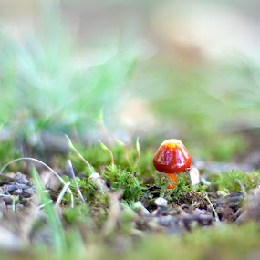 Mushroom in the moss by Aimee Hultzapple - Nature Up Close Flowers - 2011-2013
