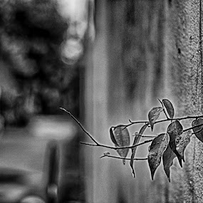 Plant on the wall by Tigor Lubis - Black & White Street & Candid
