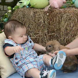 Easter Bunny by Marie Burns - Public Holidays Easter ( rabbit, easter, bunny, spring, boy )