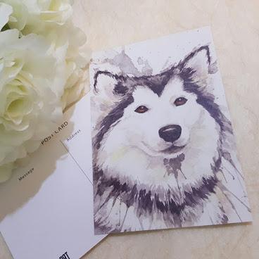 Postcard Husky