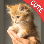 Cute Cats Memory matching GAME