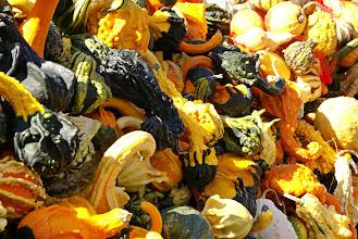 Photo: Unusual gourds