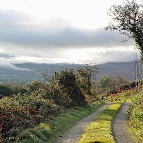 An Irish country road in late autumn by Annalie Coetzer - Landscapes Mountains & Hills ( sky, nature, lush, trees, cloudy, irish, road, landscape, rural, skies, country,  )