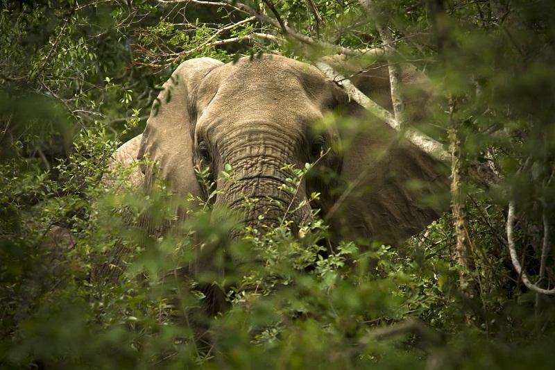 Olifante is 'n bedreiging vir plase in die son wat besproei word in Zimbabwe