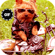 Cute Funny Animal GIF for PC-Windows 7,8,10 and Mac
