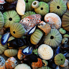 Sea Shells by Martha van der Westhuizen - Artistic Objects Other Objects