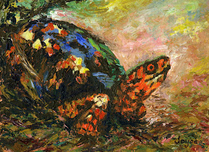 Photo: Box turtle