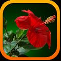 Комнатные растения беспл. icon