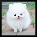 Puppy Love Wallpaper icon