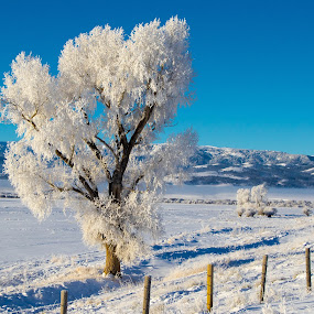 Frosty Tree by Chad Roberts - Nature Up Close Trees & Bushes ( field, snowfield, cold, tree, bark, snow, planting, crops,  )