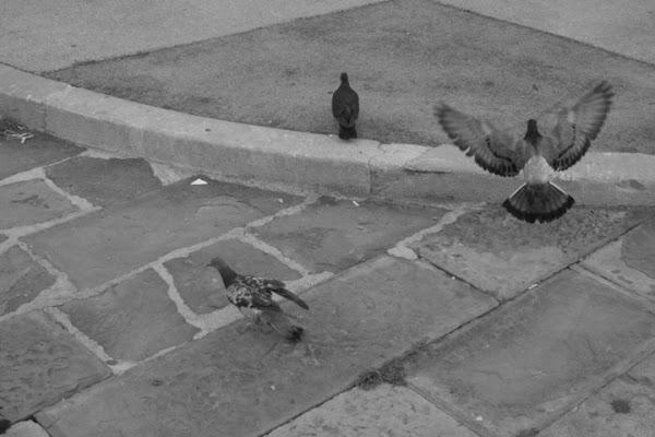 Le ali della libertà di vally64