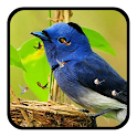 J7 HD Birds Live Wallpaper icon