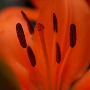 lily 6.jpg