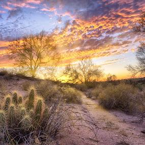 Tucson, Arizona by Charlie Alolkoy - Landscapes Deserts ( tucson, sunrise, arizona, sunset, cactus )