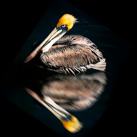 Reflections by William Underwood  - Digital Art Animals