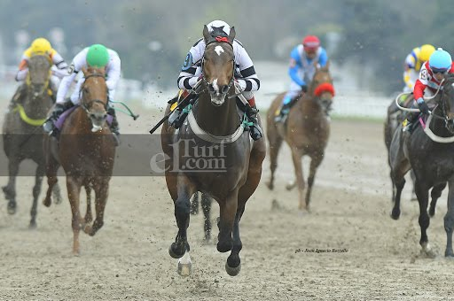Amor Lejano (Exchange Rate) se impuso en Condicional (1000m-Arena-PAL).