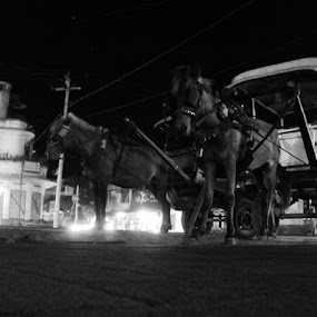 The cidomo by Wanz Wan - Transportation Other ( transportition, horse, local, lombok )