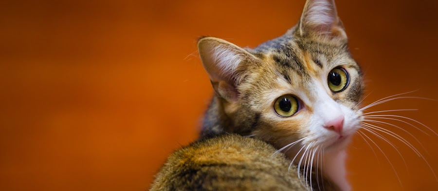 by Marianne Molloy - Animals - Cats Portraits