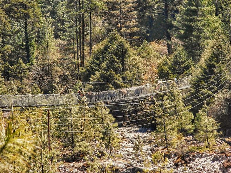 Yaks crossing one of the many suspension bridges en-route.