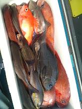 Photo: これはー? あっ、タムラさんの。 本日のトップ賞!真鯛17匹!あとイサキ7匹、クロなどでした。流石でした!