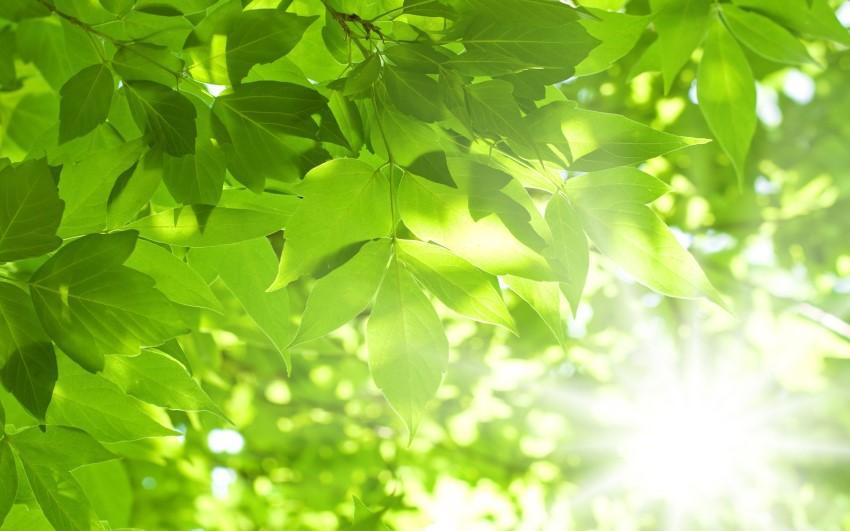 Mệnh Mộc đại diện cho cây cối và sự sống trên Trái Đất