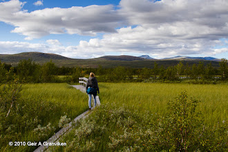 Photo: The marsh Fokstumyra, a nature reseve known for it's rich birdlife, in the Dovre Mountains