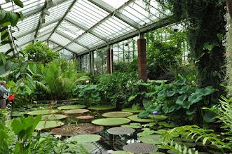 Photo: Waterplanten in serre Kew Royal Botanical Gardens