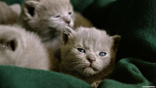 Милые котята HD