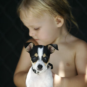 by Joe Wallace - Animals - Dogs Portraits