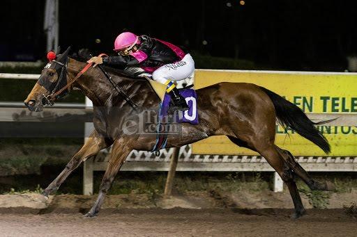 Mi Mona (Seeking The Dia) gana Handicap (1000m-Arena-CHS). - Staff ElTurf.com