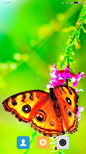 Hd Butterfly Wallpaper Google Play Ilovalari