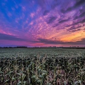 South Dakota Sunset by Andrew Brinkman - Landscapes Sunsets & Sunrises ( farm, colorful, sunset, midwest, farmland, south dakota, landscape, farming, corn field, corn )