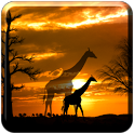 African Scene LITE icon