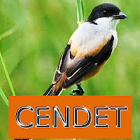 Download Master Kicau Cendet Free For Android Master Kicau Cendet Apk Download Steprimo Com