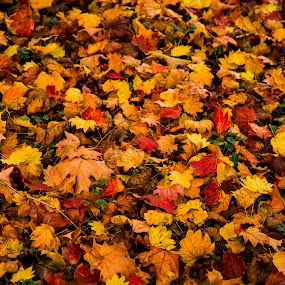 Autumn Leaves by Madhujith Venkatakrishna - Nature Up Close Leaves & Grasses (  )
