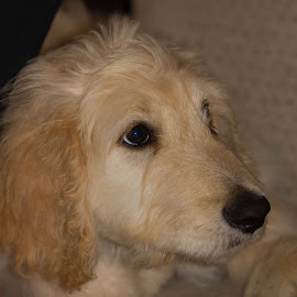 Donald by Stuart Walker - Animals - Dogs Puppies