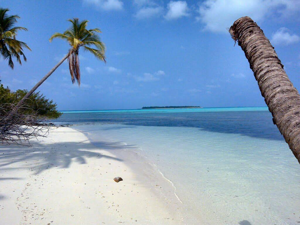 A beach with palm trees and a body of water Description automatically generated