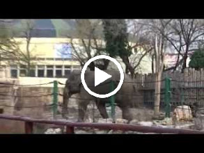 Video: hungary, travel, zoological, zoo, park, garden, budapest