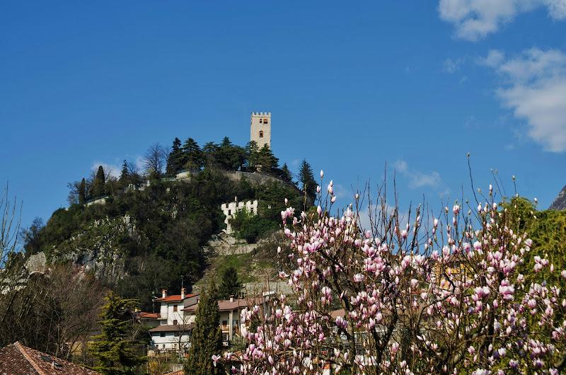 paesaggio incorniciato dalla magnolia di Daria Bellina