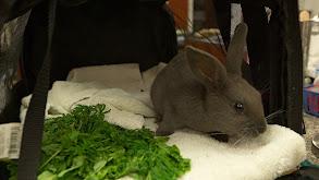 Bunny Nose Job thumbnail