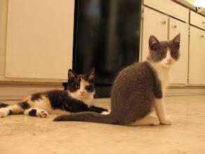 Photo: Eliza and Bella.