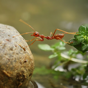 crossing by Angga Putra - Animals Insects & Spiders